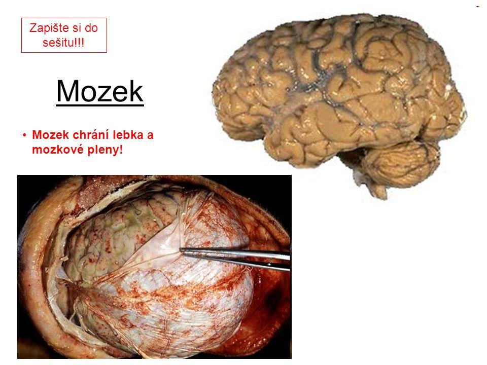 Mozek Mozek chrání lebka a mozkové pleny! Zapište si do sešitu!!!