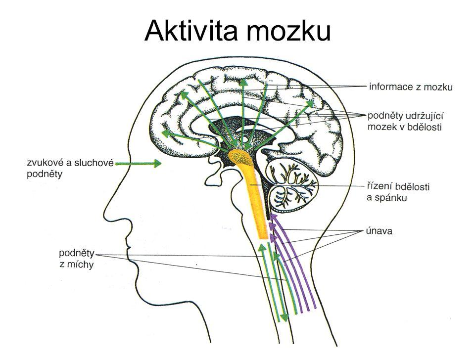 Aktivita mozku