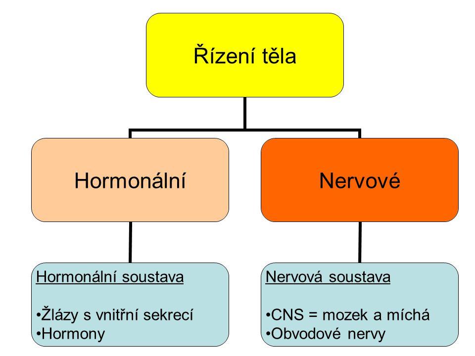 Řízení těla Hormonální Hormonální soustava Žlázy s vnitřní sekrecí Hormony Nervové Nervová soustava CNS = mozek a míchá Obvodové nervy