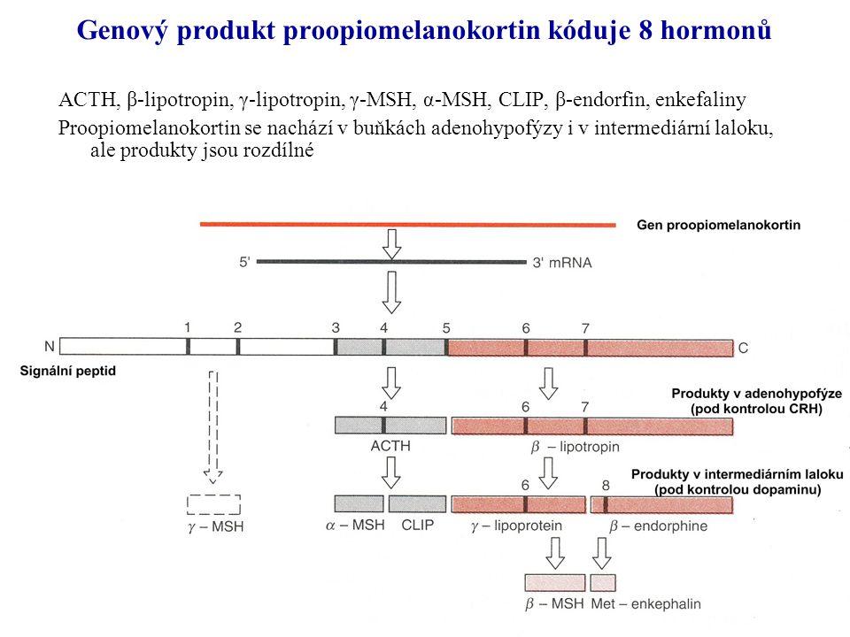 Genový produkt proopiomelanokortin kóduje 8 hormonů ACTH, β-lipotropin, γ-lipotropin, γ-MSH, α-MSH, CLIP, β-endorfin, enkefaliny Proopiomelanokortin s