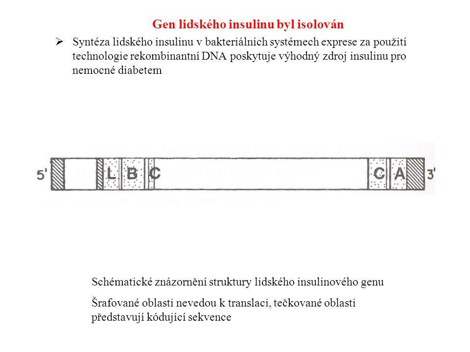 Gen lidského insulinu byl isolován  Syntéza lidského insulinu v bakteriálních systémech exprese za použití technologie rekombinantní DNA poskytuje vý