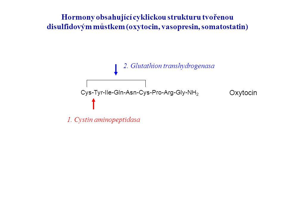 Hormony obsahující cyklickou strukturu tvořenou disulfidovým můstkem (oxytocin, vasopresin, somatostatin) Cys-Tyr-Ile-Gln-Asn-Cys-Pro-Arg-Gly-NH 2 Oxy