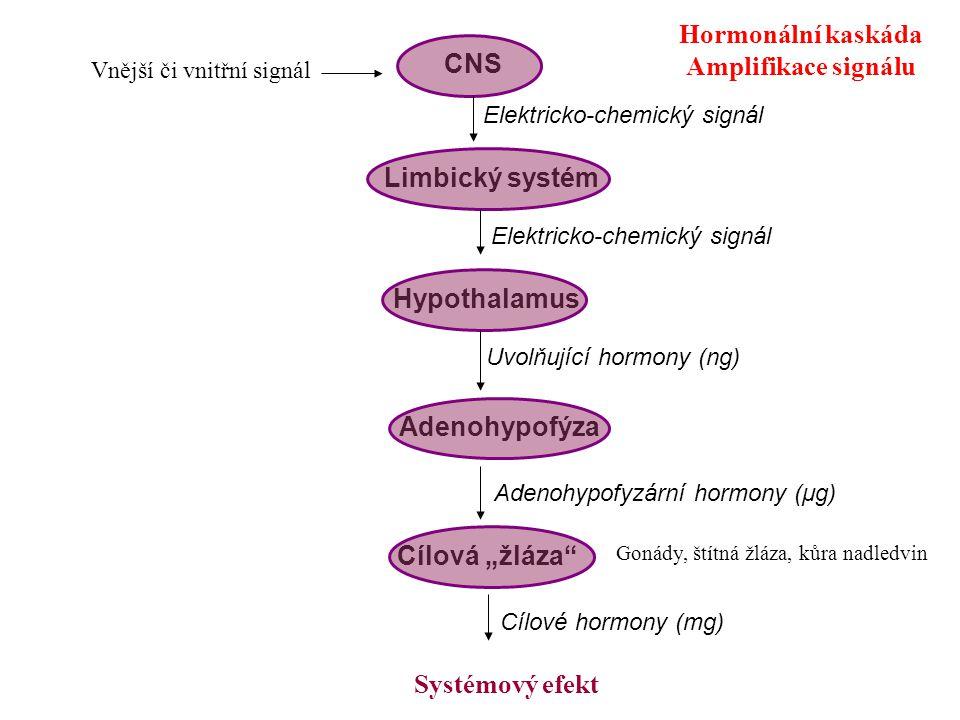 """CNS Limbický systém Hypothalamus Adenohypofýza Cílová """"žláza"""" Vnější či vnitřní signál Elektricko-chemický signál Uvolňující hormony (ng) Adenohypofyz"""