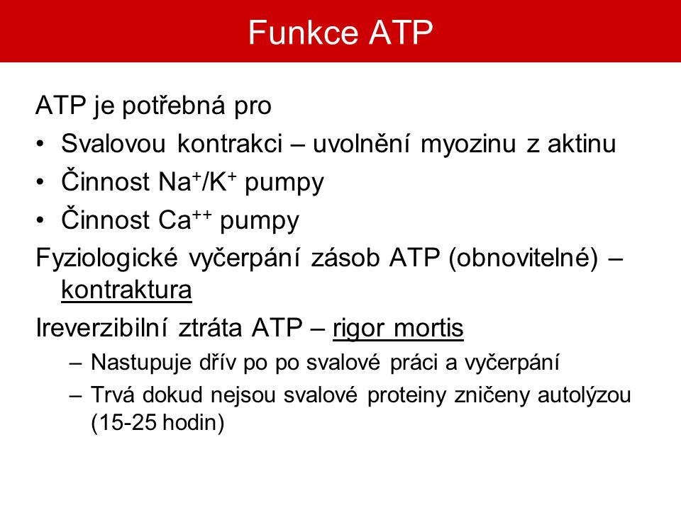 Funkce ATP ATP je potřebná pro Svalovou kontrakci – uvolnění myozinu z aktinu Činnost Na + /K + pumpy Činnost Ca ++ pumpy Fyziologické vyčerpání zásob