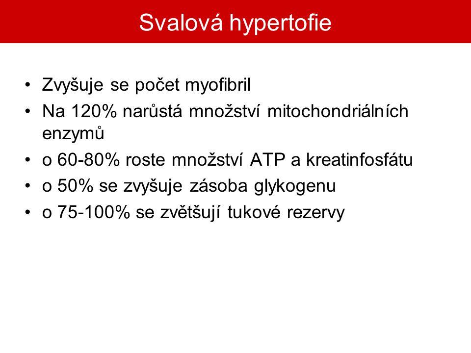 Svalová hypertofie Zvyšuje se počet myofibril Na 120% narůstá množství mitochondriálních enzymů o 60-80% roste množství ATP a kreatinfosfátu o 50% se