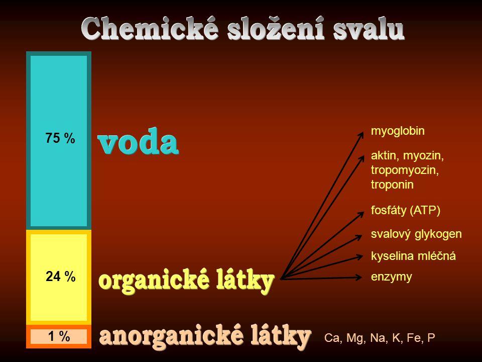 75 % 24 % 1 % myoglobin aktin, myozin, tropomyozin, troponin fosfáty (ATP) svalový glykogen kyselina mléčná enzymy Ca, Mg, Na, K, Fe, P