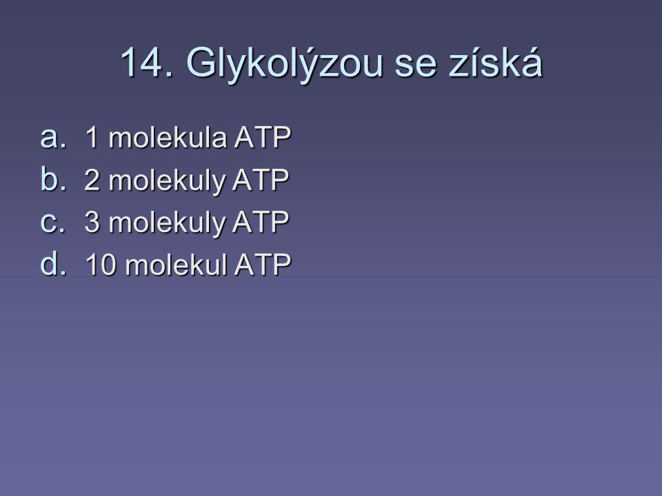 13. Při stálém pohybu se sval unaví a je produkována a. glykogen b. škrob c. ATP d. kyselina mléčná