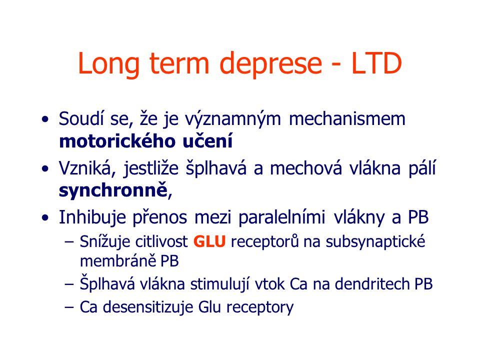 Long term deprese - LTD Soudí se, že je významným mechanismem motorického učení Vzniká, jestliže šplhavá a mechová vlákna pálí synchronně, Inhibuje přenos mezi paralelními vlákny a PB –Snížuje citlivost GLU receptorů na subsynaptické membráně PB –Šplhavá vlákna stimulují vtok Ca na dendritech PB –Ca desensitizuje Glu receptory