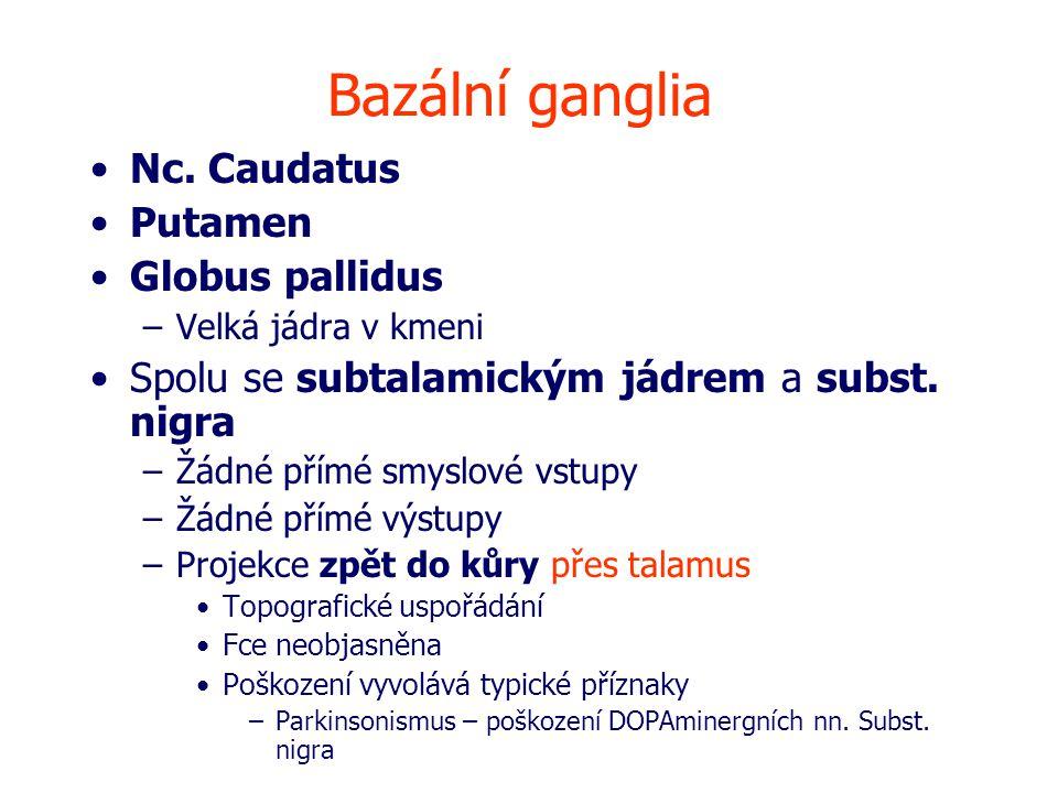 Bazální ganglia Nc.