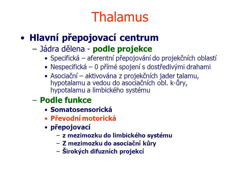 Thalamus Hlavní přepojovací centrum –Jádra dělena - podle projekce Specifická – aferentní přepojování do projekčních oblastí Nespecifická – 0 přímé spojení s dostředivými drahami Asociační – aktivována z projekčních jader talamu, hypotalamu a vedou do asociačních obl.