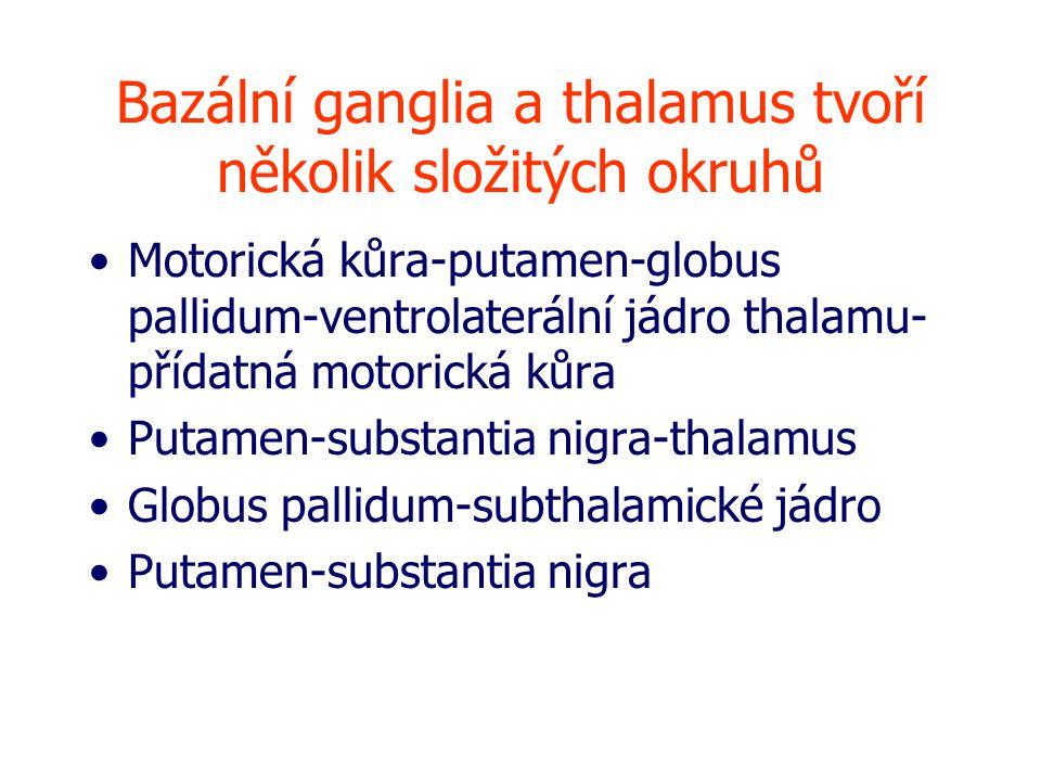 Bazální ganglia a thalamus tvoří několik složitých okruhů Motorická kůra-putamen-globus pallidum-ventrolaterální jádro thalamu- přídatná motorická kůra Putamen-substantia nigra-thalamus Globus pallidum-subthalamické jádro Putamen-substantia nigra