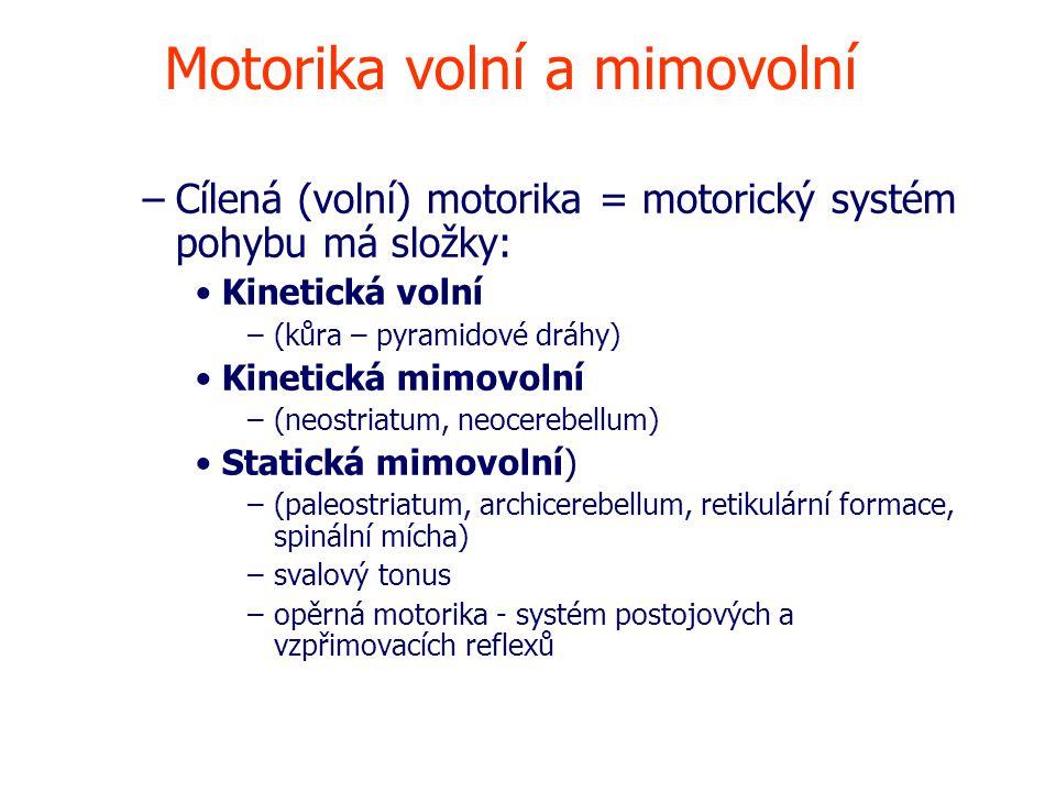 Motorika volní a mimovolní –Cílená (volní) motorika = motorický systém pohybu má složky: Kinetická volní –(kůra – pyramidové dráhy) Kinetická mimovolní –(neostriatum, neocerebellum) Statická mimovolní) –(paleostriatum, archicerebellum, retikulární formace, spinální mícha) –svalový tonus –opěrná motorika - systém postojových a vzpřimovacích reflexů
