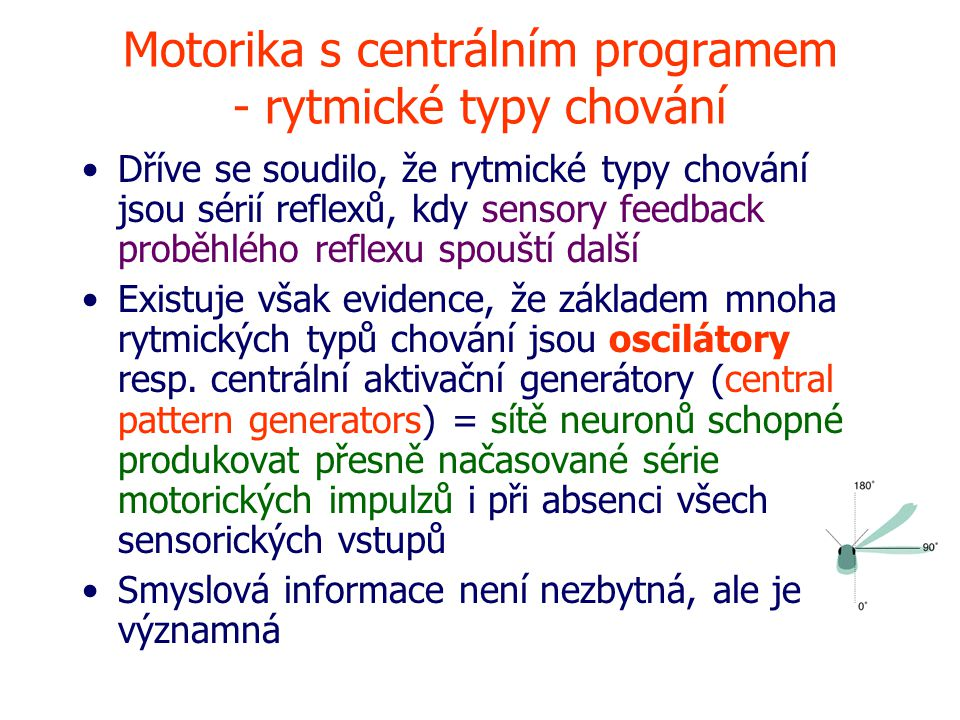 Motorika s centrálním programem - rytmické typy chování Dříve se soudilo, že rytmické typy chování jsou sérií reflexů, kdy sensory feedback proběhlého reflexu spouští další Existuje však evidence, že základem mnoha rytmických typů chování jsou oscilátory resp.