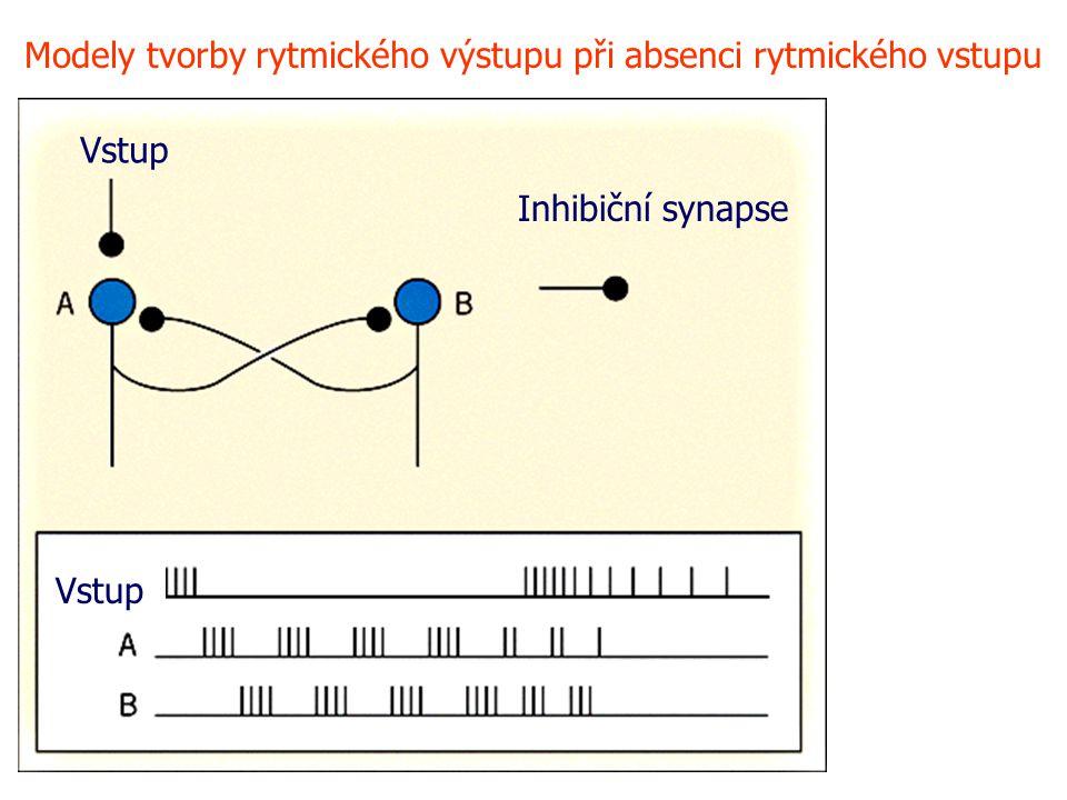 Inhibiční synapse Vstup Modely tvorby rytmického výstupu při absenci rytmického vstupu