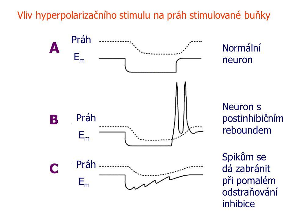 A Práh EmEm EmEm EmEm B C Vliv hyperpolarizačního stimulu na práh stimulované buňky Normální neuron Neuron s postinhibičním reboundem Spikům se dá zabránit při pomalém odstraňování inhibice