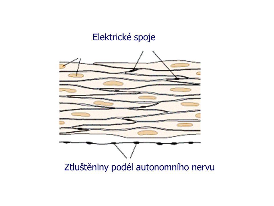 Elektrické spoje Ztluštěniny podél autonomního nervu