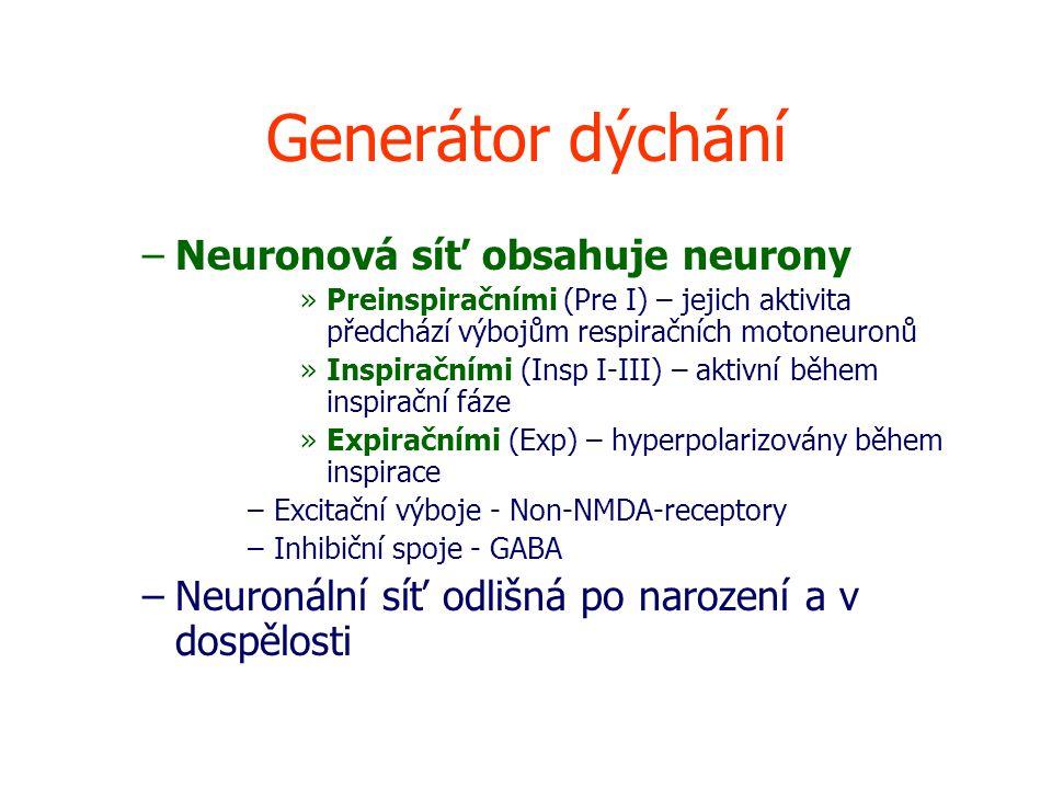 Generátor dýchání –Neuronová síť obsahuje neurony »Preinspiračními (Pre I) – jejich aktivita předchází výbojům respiračních motoneuronů »Inspiračními (Insp I-III) – aktivní během inspirační fáze »Expiračními (Exp) – hyperpolarizovány během inspirace –Excitační výboje - Non-NMDA-receptory –Inhibiční spoje - GABA –Neuronální síť odlišná po narození a v dospělosti