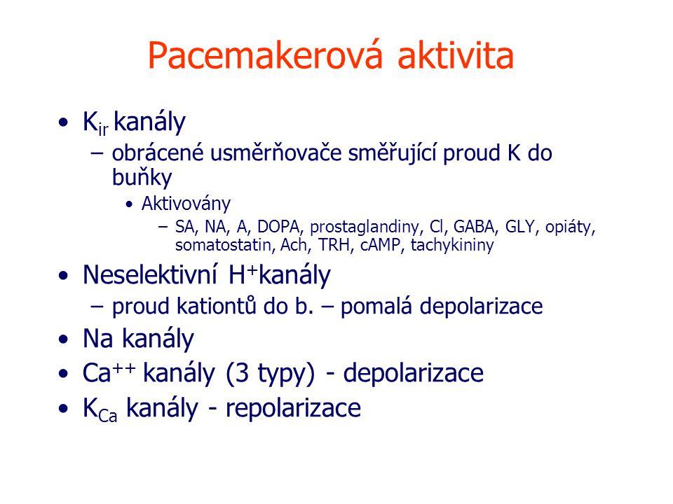 Pacemakerová aktivita K ir kanály –obrácené usměrňovače směřující proud K do buňky Aktivovány –SA, NA, A, DOPA, prostaglandiny, Cl, GABA, GLY, opiáty, somatostatin, Ach, TRH, cAMP, tachykininy Neselektivní H + kanály –proud kationtů do b.