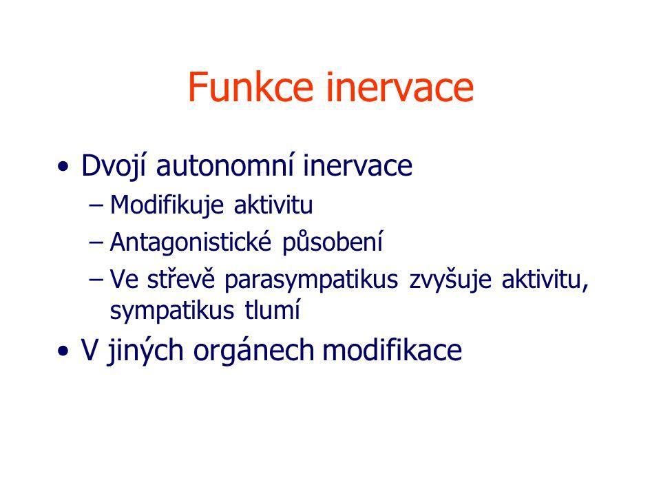 Funkce inervace Dvojí autonomní inervace –Modifikuje aktivitu –Antagonistické působení –Ve střevě parasympatikus zvyšuje aktivitu, sympatikus tlumí V jiných orgánech modifikace