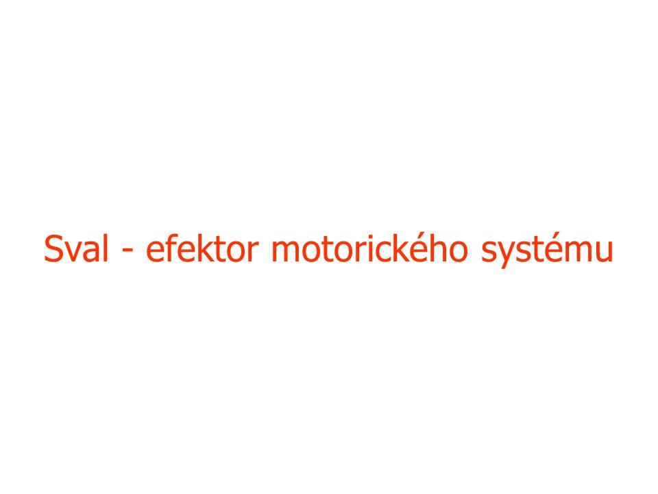 Sval - efektor motorického systému