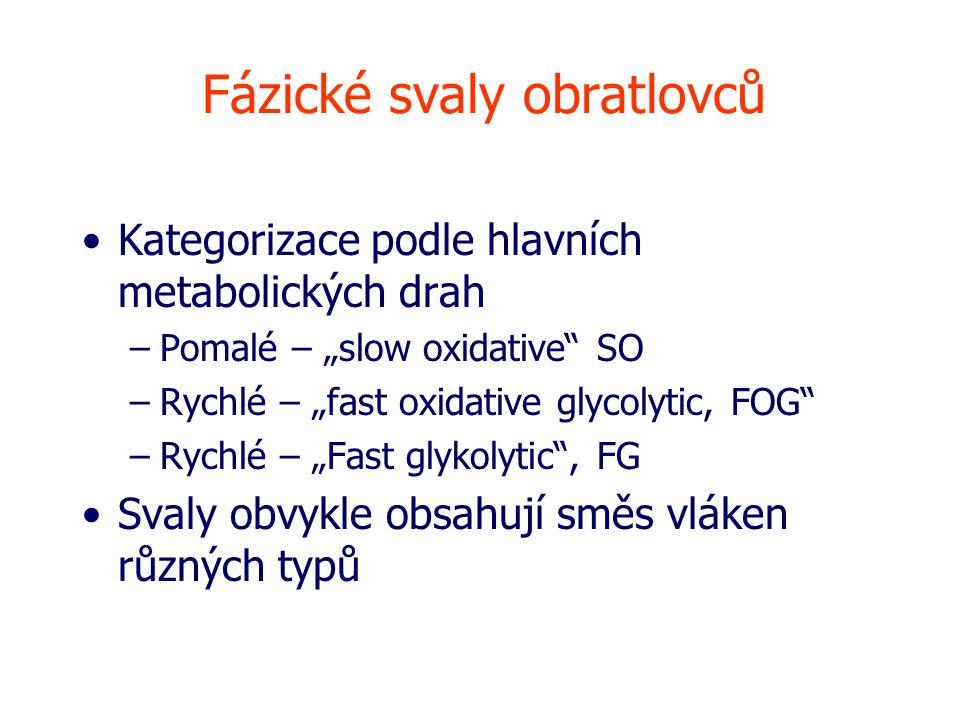 """Fázické svaly obratlovců Kategorizace podle hlavních metabolických drah –Pomalé – """"slow oxidative SO –Rychlé – """"fast oxidative glycolytic, FOG –Rychlé – """"Fast glykolytic , FG Svaly obvykle obsahují směs vláken různých typů"""