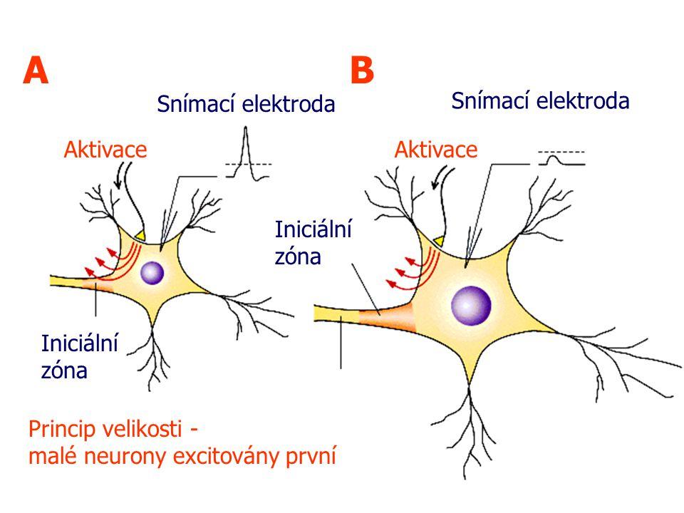 AB Princip velikosti - malé neurony excitovány první Iniciální zóna Snímací elektroda Aktivace