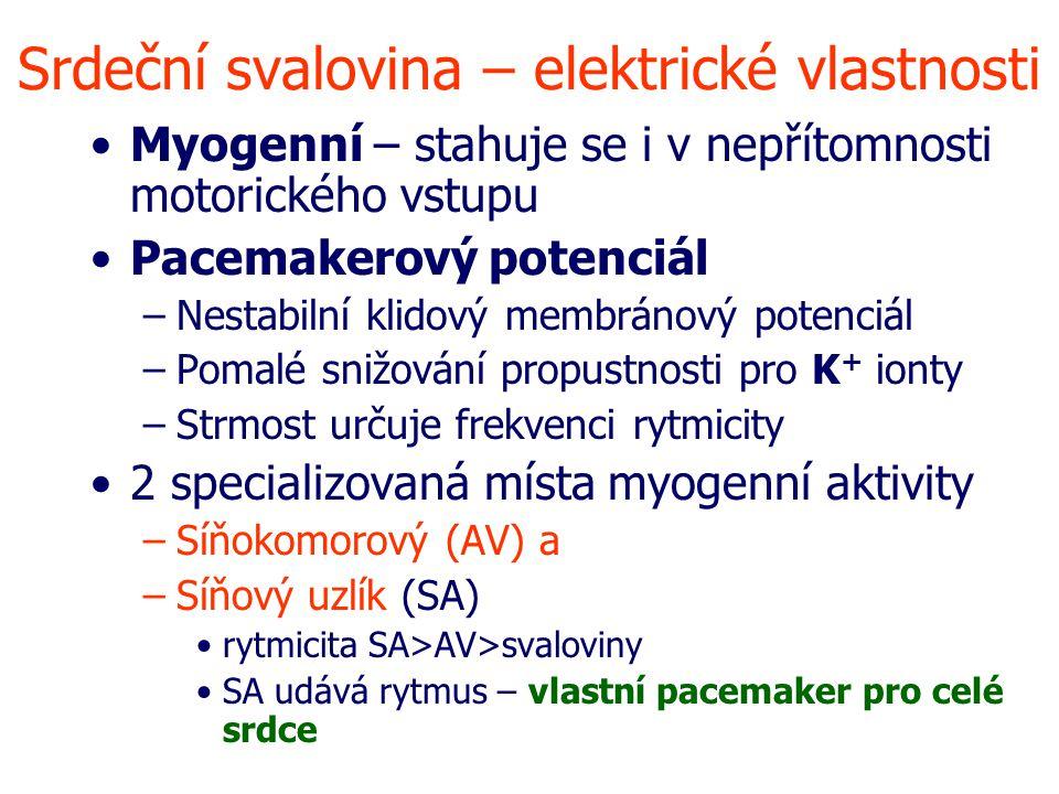 Srdeční svalovina – elektrické vlastnosti Myogenní – stahuje se i v nepřítomnosti motorického vstupu Pacemakerový potenciál –Nestabilní klidový membránový potenciál –Pomalé snižování propustnosti pro K + ionty –Strmost určuje frekvenci rytmicity 2 specializovaná místa myogenní aktivity –Síňokomorový (AV) a –Síňový uzlík (SA) rytmicita SA>AV>svaloviny SA udává rytmus – vlastní pacemaker pro celé srdce