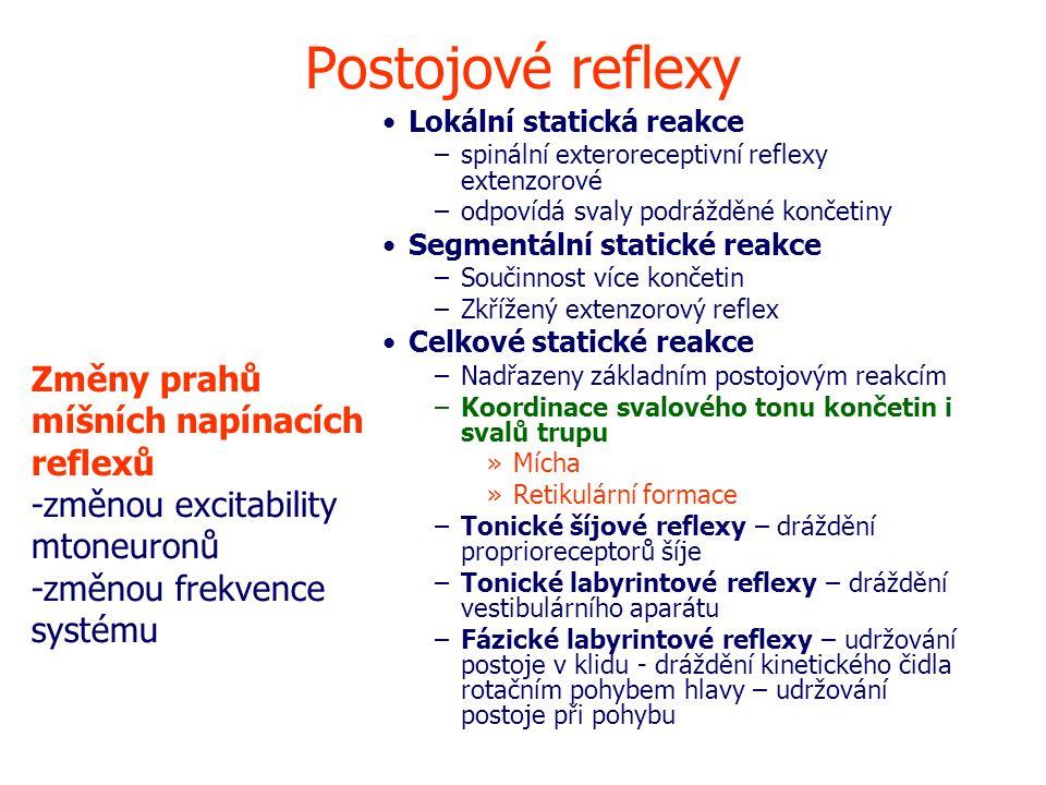 Postojové reflexy Lokální statická reakce –spinální exteroreceptivní reflexy extenzorové –odpovídá svaly podrážděné končetiny Segmentální statické reakce –Součinnost více končetin –Zkřížený extenzorový reflex Celkové statické reakce –Nadřazeny základním postojovým reakcím –Koordinace svalového tonu končetin i svalů trupu »Mícha »Retikulární formace –Tonické šíjové reflexy – dráždění proprioreceptorů šíje –Tonické labyrintové reflexy – dráždění vestibulárního aparátu –Fázické labyrintové reflexy – udržování postoje v klidu - dráždění kinetického čidla rotačním pohybem hlavy – udržování postoje při pohybu Změny prahů míšních napínacích reflexů -změnou excitability mtoneuronů -změnou frekvence systému