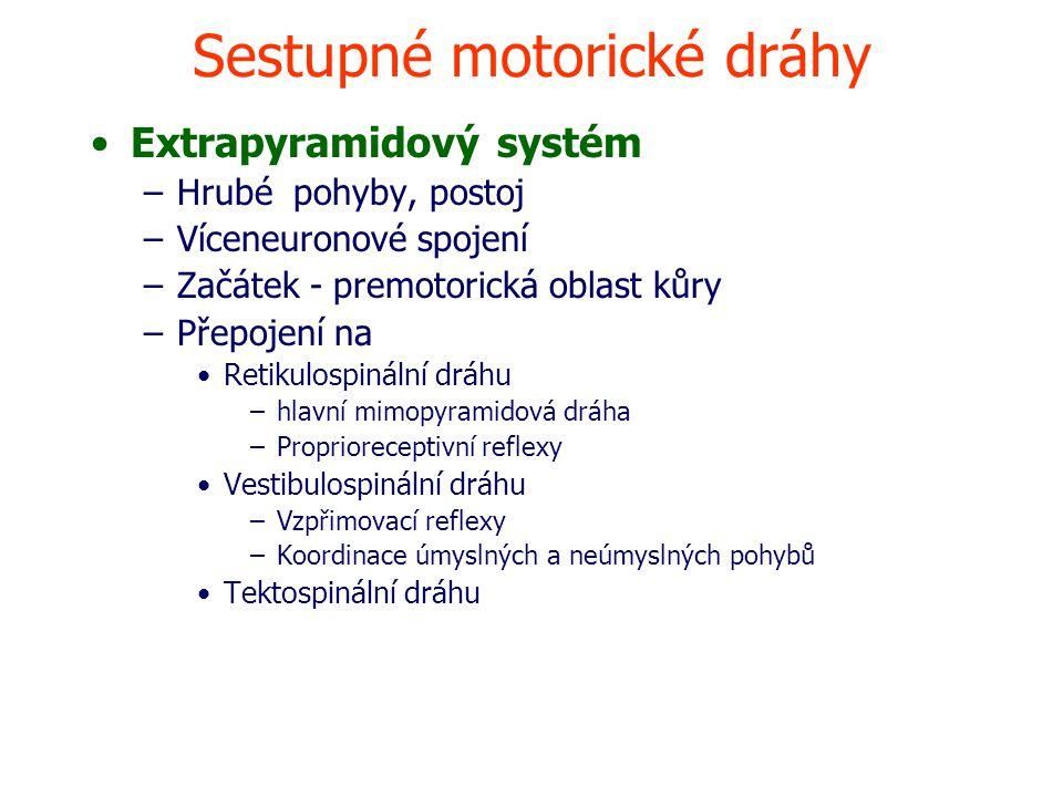 Sestupné motorické dráhy Extrapyramidový systém –Hrubé pohyby, postoj –Víceneuronové spojení –Začátek - premotorická oblast kůry –Přepojení na Retikulospinální dráhu –hlavní mimopyramidová dráha –Proprioreceptivní reflexy Vestibulospinální dráhu –Vzpřimovací reflexy –Koordinace úmyslných a neúmyslných pohybů Tektospinální dráhu