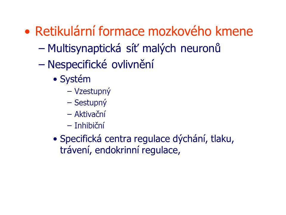 Retikulární formace mozkového kmene –Multisynaptická síť malých neuronů –Nespecifické ovlivnění Systém –Vzestupný –Sestupný –Aktivační –Inhibiční Specifická centra regulace dýchání, tlaku, trávení, endokrinní regulace,
