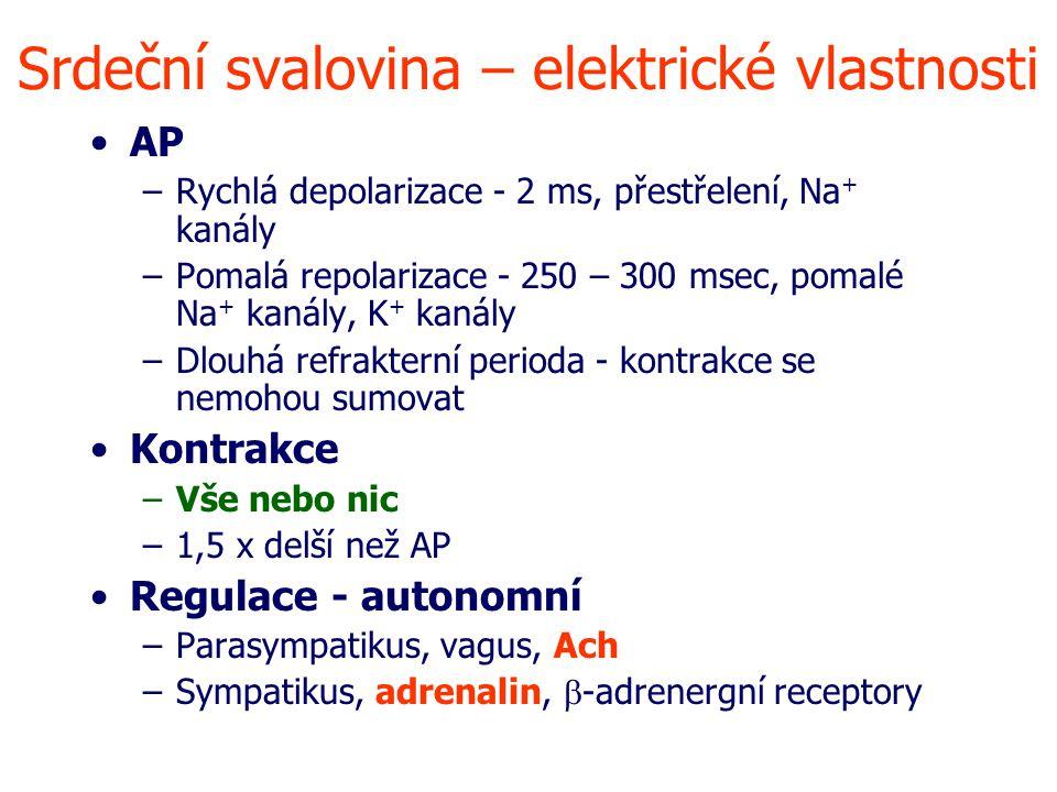 Srdeční svalovina – elektrické vlastnosti AP –Rychlá depolarizace - 2 ms, přestřelení, Na + kanály –Pomalá repolarizace - 250 – 300 msec, pomalé Na + kanály, K + kanály –Dlouhá refrakterní perioda - kontrakce se nemohou sumovat Kontrakce –Vše nebo nic –1,5 x delší než AP Regulace - autonomní –Parasympatikus, vagus, Ach –Sympatikus, adrenalin,  -adrenergní receptory