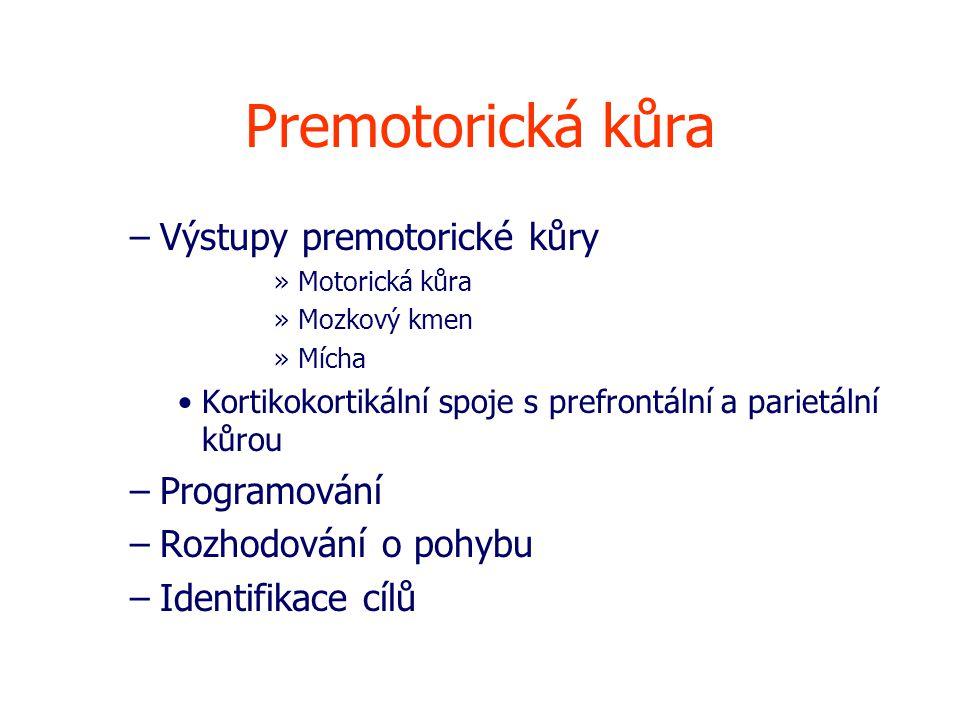 Premotorická kůra –Výstupy premotorické kůry »Motorická kůra »Mozkový kmen »Mícha Kortikokortikální spoje s prefrontální a parietální kůrou –Programování –Rozhodování o pohybu –Identifikace cílů