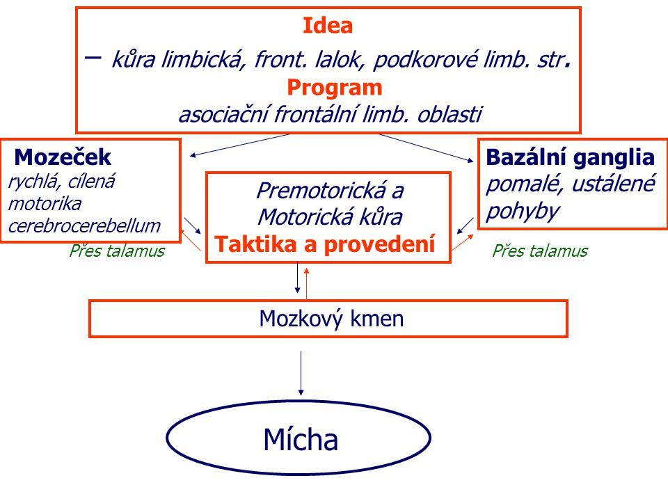 Idea – kůra limbická, front.lalok, podkorové limb.