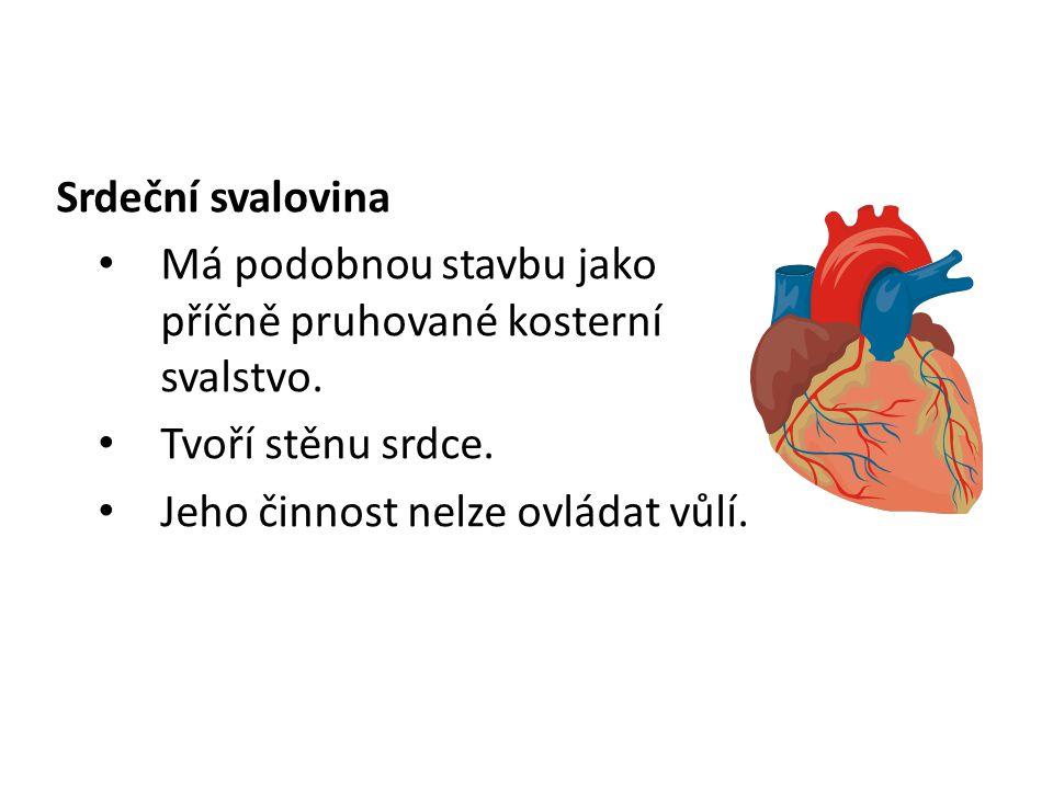 Srdeční svalovina Má podobnou stavbu jako příčně pruhované kosterní svalstvo. Tvoří stěnu srdce. Jeho činnost nelze ovládat vůlí.