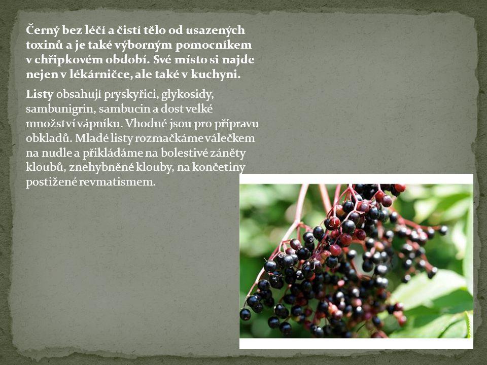 Černý bez léčí a čistí tělo od usazených toxinů a je také výborným pomocníkem v chřipkovém období.