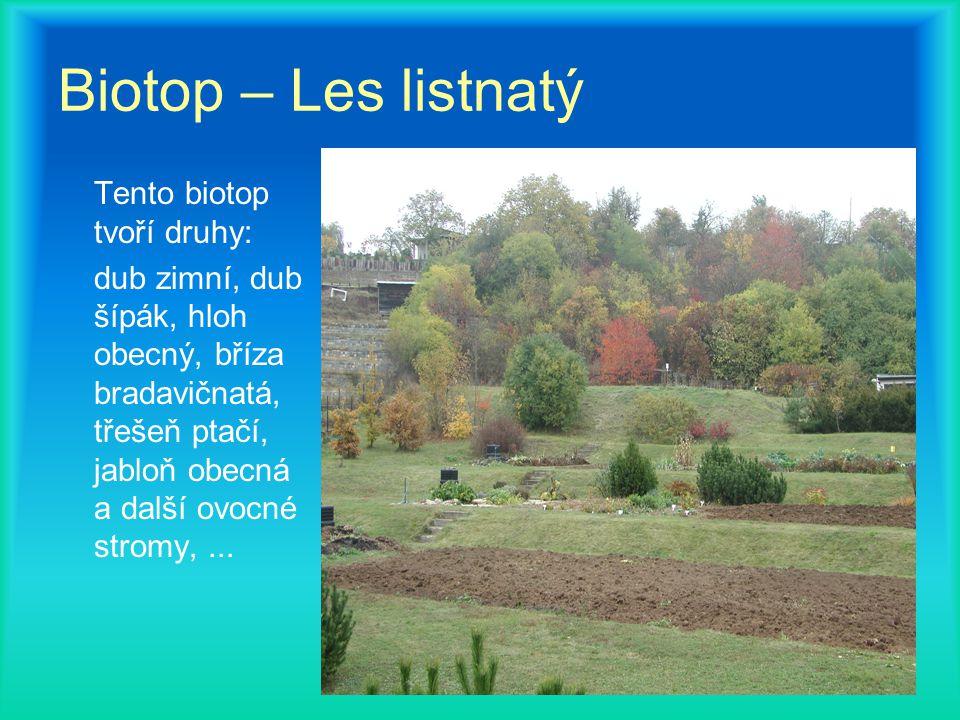 Biotop – Les listnatý Tento biotop tvoří druhy: dub zimní, dub šípák, hloh obecný, bříza bradavičnatá, třešeň ptačí, jabloň obecná a další ovocné stromy,...