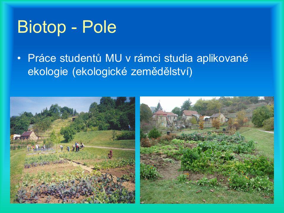 Biotop - Pole Práce studentů MU v rámci studia aplikované ekologie (ekologické zemědělství)