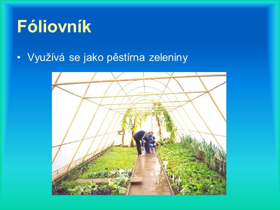 Fóliovník Využívá se jako pěstírna zeleniny