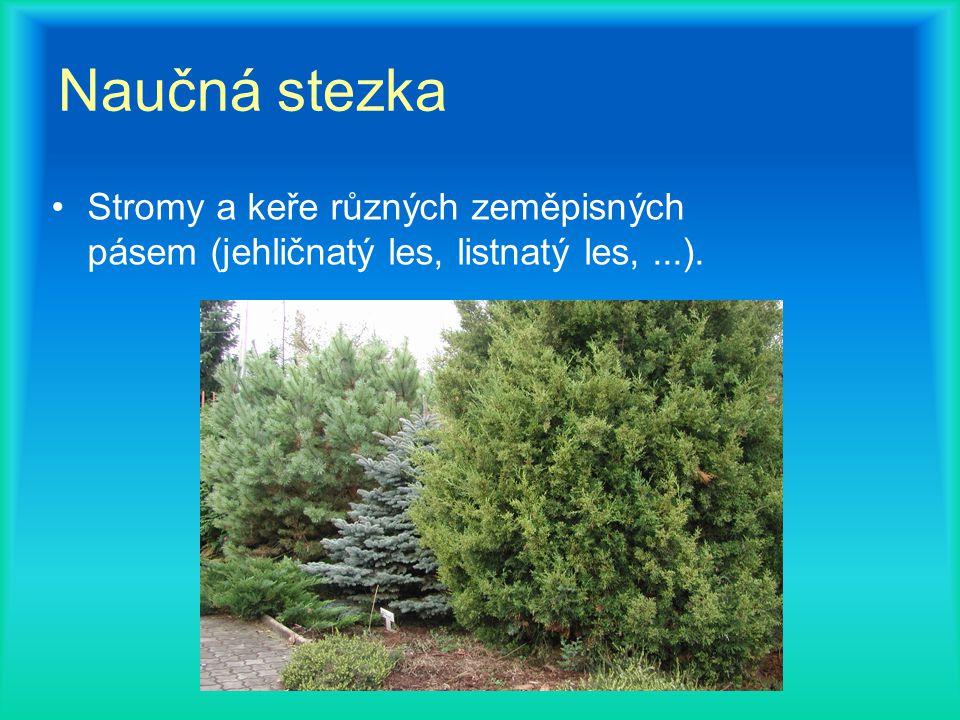Naučná stezka Stromy a keře různých zeměpisných pásem (jehličnatý les, listnatý les,...).