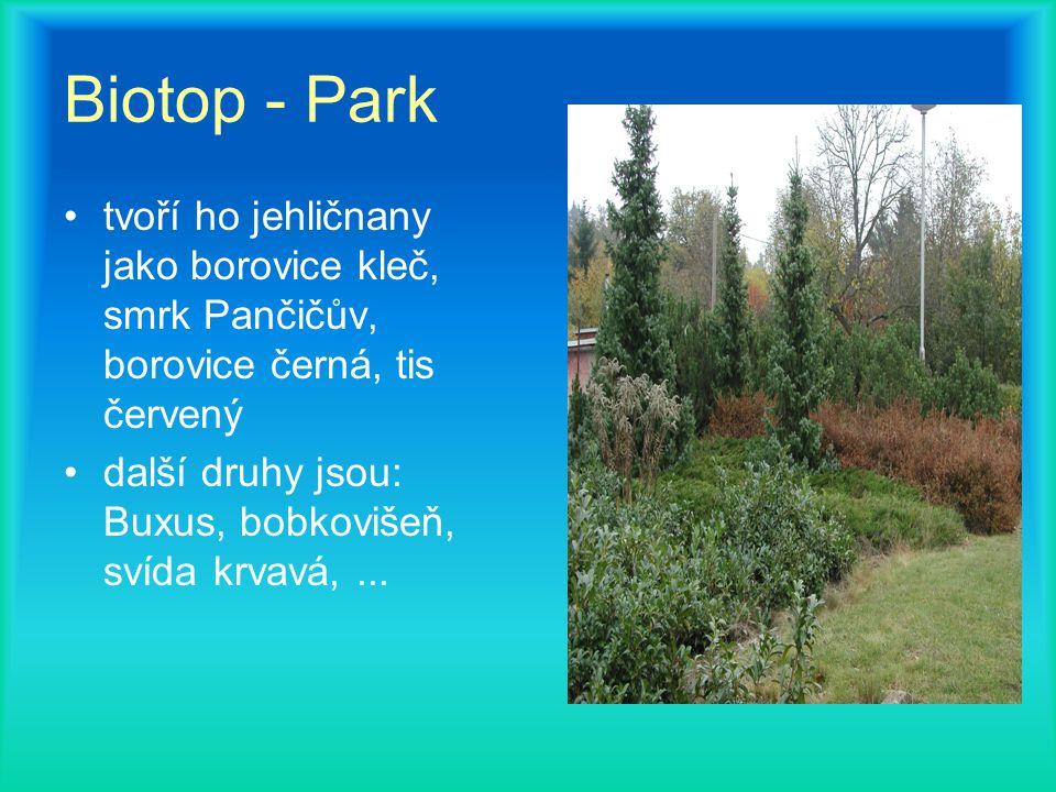 Biotop - Park tvoří ho jehličnany jako borovice kleč, smrk Pančičův, borovice černá, tis červený další druhy jsou: Buxus, bobkovišeň, svída krvavá,...