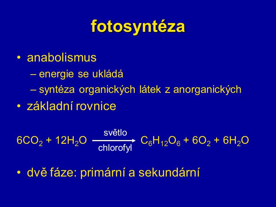fotosyntéza anabolismus –energie se ukládá –syntéza organických látek z anorganických základní rovnice 6CO 2 + 12H 2 O C 6 H 12 O 6 + 6O 2 + 6H 2 O dv