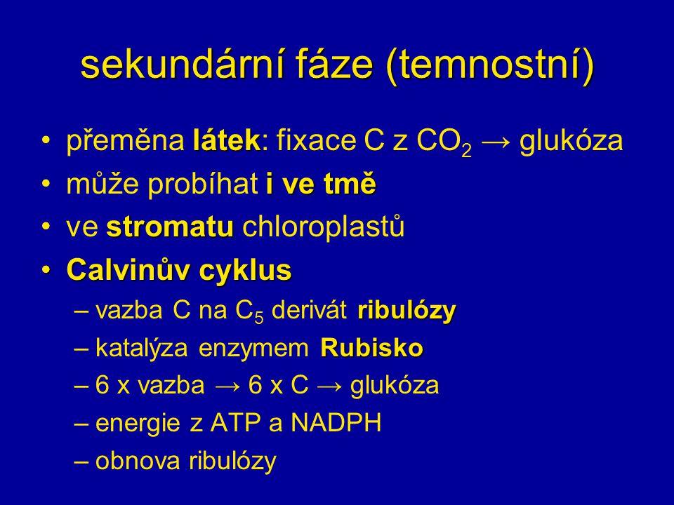 sekundární fáze (temnostní) látekpřeměna látek: fixace C z CO 2 → glukóza i ve tměmůže probíhat i ve tmě stromatuve stromatu chloroplastů Calvinův cyk