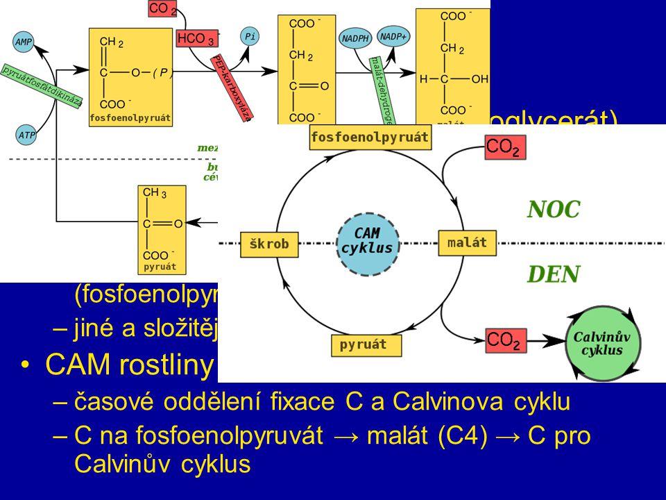 sekundární fáze C 3 rostliny – 1. produkt je C3 (fosfoglycerát) –vysoká fotorespirace (spotřeba vyrobeného) C 4 rostliny – 1. produkt je C4 (oxalacetá