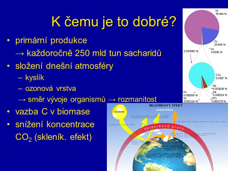 K čemu je to dobré? primární produkce → každoročně 250 mld tun sacharidů složení dnešní atmosféry –kyslík –ozonová vrstva → směr vývoje organismů → ro