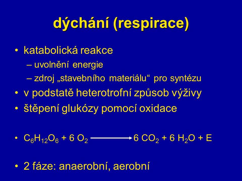 """dýchání (respirace) katabolická reakce –uvolnění energie –zdroj """"stavebního materiálu"""" pro syntézu v podstatě heterotrofní způsob výživy štěpení glukó"""