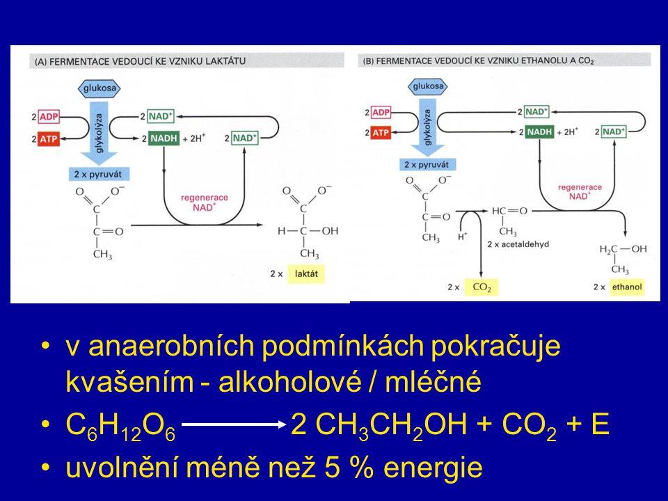 anaerobní fáze = glykolýza v cytoplazmě oxidace → vznik NADH z NAD +, 2 ATP a 2 molekul kys. pyrohroznové (pyruvát) v anaerobních podmínkách pokračuje