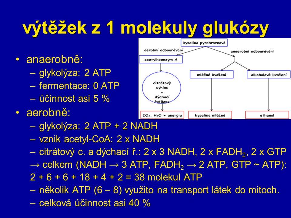 výtěžek z 1 molekuly glukózy anaerobně: –glykolýza: 2 ATP –fermentace: 0 ATP –účinnost asi 5 % aerobně: –glykolýza: 2 ATP + 2 NADH –vznik acetyl-CoA: