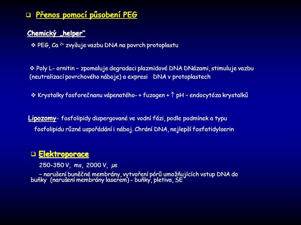 """Chemický """"helper""""  Poly L- ornitin – zpomaluje degradaci plazmidové DNA DNázami, stimuluje vazbu (neutralizací povrchového náboje) a expresi DNA v pr"""