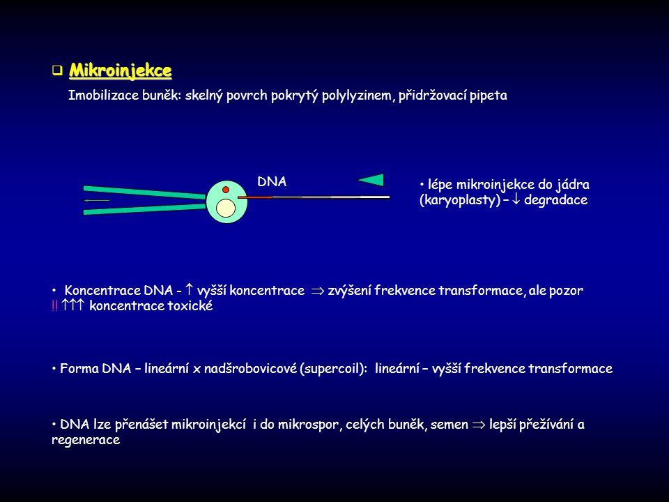 lépe mikroinjekce do jádra (karyoplasty) –  degradace Koncentrace DNA -  vyšší koncentrace  zvýšení frekvence transformace, ale pozor !!  koncen