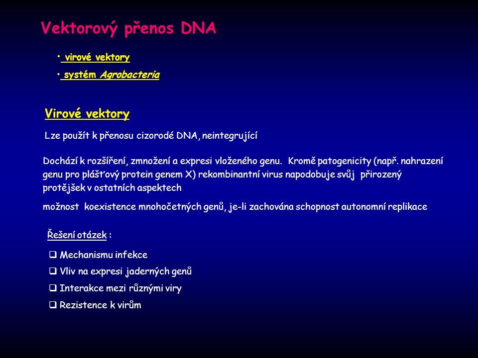 Vektorový přenos DNA Virové vektory Dochází k rozšíření, zmnožení a expresi vloženého genu. Kromě patogenicity (např. nahrazení genu pro plášťový prot